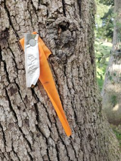 Tree Tagging – What Does it Mean?